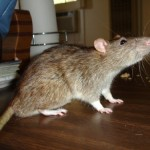Catching Rats in a Soup Pot; Magno's Monday Rant
