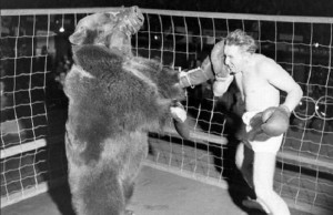 man boxing bear